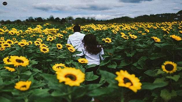 Check in cánh đồng hoa Hướng Dương