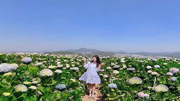 Tham quan cánh đồng hoa Cẩm Tú Cầu Đà Lạt