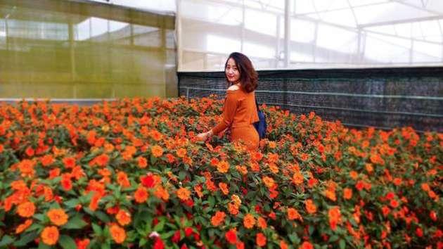 Tham quan Làng hoa Vạn Thành
