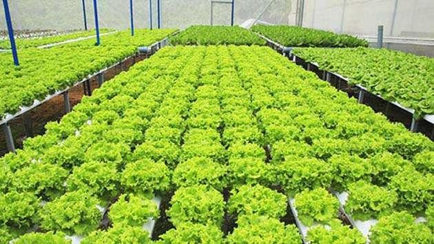 Tham quan trang trại rau thủy canh Đà Lạt