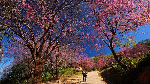 What season is the best season to travel to Da Lat?