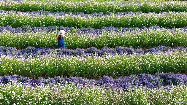Cảm nhận khi đặt chân đến F cánh đồng hoa