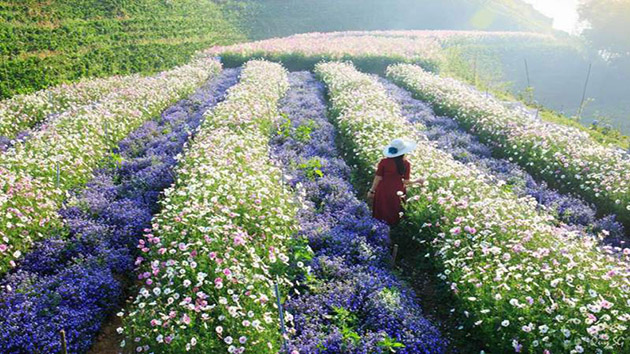 Địa chỉ F cánh đồng hoa