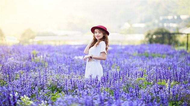 Hình ảnh đẹp tại F cánh đồng hoa Đà Lạt