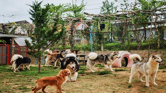 Nông trại cún Puppy Farm Đà Lạt có gì HOT?