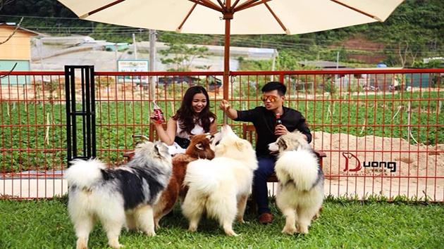 Trại chó Alaska - Puppy Farm Đà Lạt