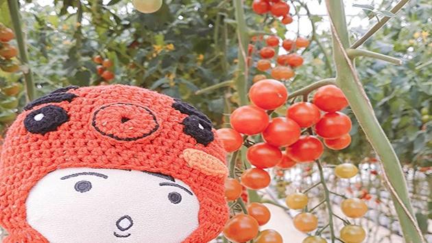Vườn cà chua