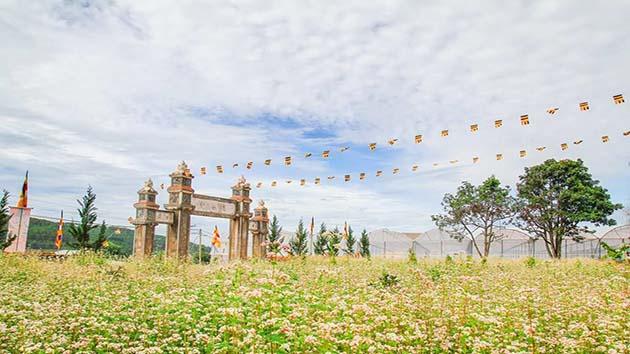 Vườn hoa Tam Giác Mạch đẹp nhất tại Đà Lạt