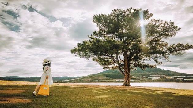 Cây thông cô đơn địa điểm du lịch không thể bỏ qua khi đến Đà Lạt
