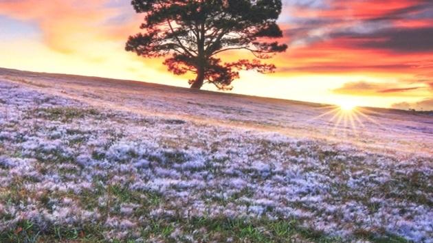 Đồi cỏ hồng, cỏ tuyết ở Đà Lạt xuất hiện vào tháng 11 hàng năm