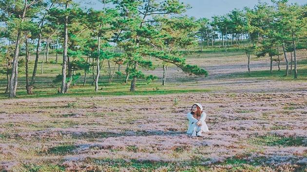 Đồi cỏ hồng, cỏ tuyết ở Đà Lạt