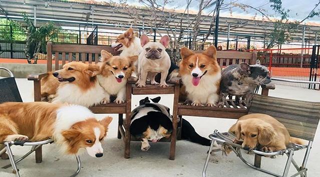 Trang trại cún Puppy Farm Đà Lạt