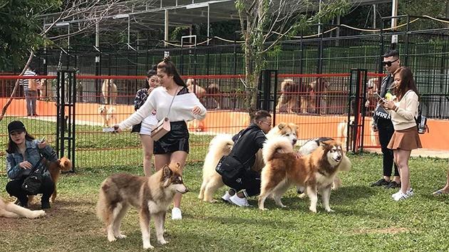 Vui đùa cùng những chú cún siêu dễ thương tại Puppy Farm