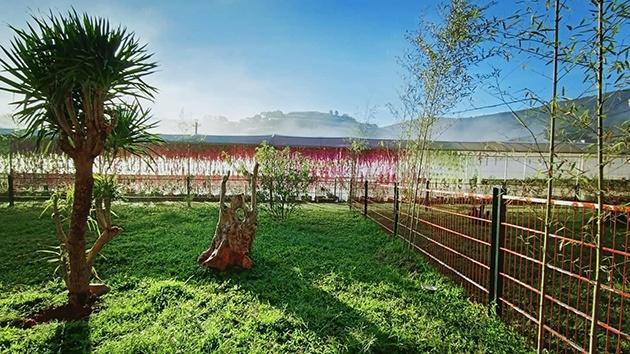 Nông trại cún Puppy Farm ở Đà Lạt