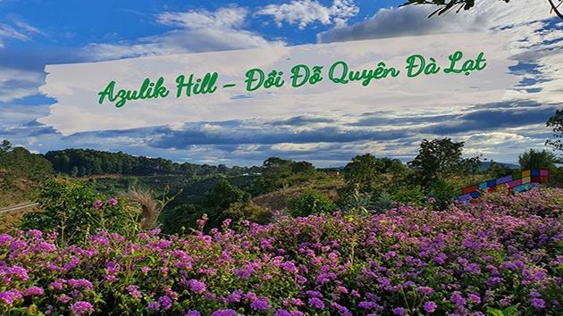 Azulik Hill - Đồi Đỗ Quyên Đà Lạt