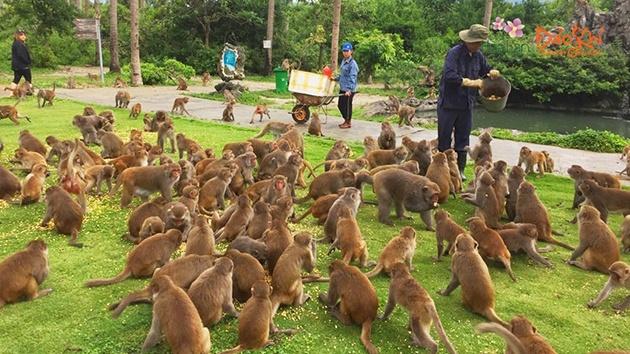 Đảo Khỉ Hòn Lao Nha Trang