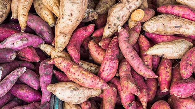 Khoai Lang - Thực phẩm quốc dân