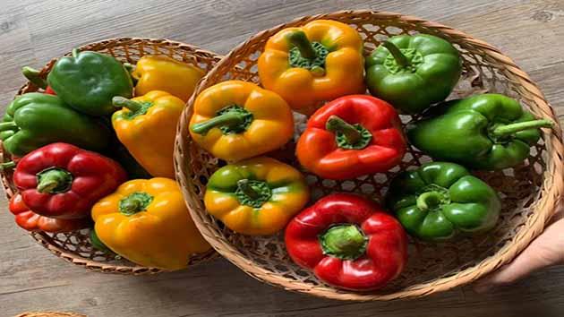 Ớt Chuông - Loại ớt là thường không cay nóng