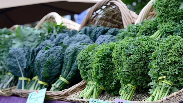 Rau cải xoăn Kale Đà Lạt