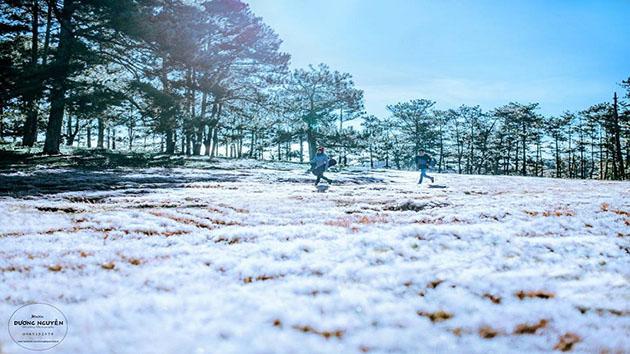 """Cánh đống cỏ tuyết - cỏ hồng địa đểm """"sống ảo"""" được du khách yêu thích nhất"""