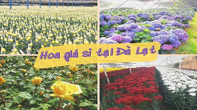Hoa giá sỉ tại Đà Lạt