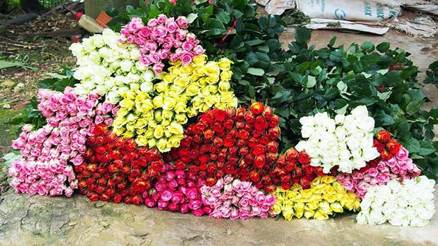 Hoa Hồng Đà Lạt - Loài hoa mang vẻ đẹp cao sang, quyền quý