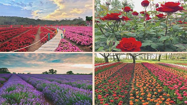 Một số loài hoa tại Đà Lạt được yêu thích và lựa chọn nhiều nhất