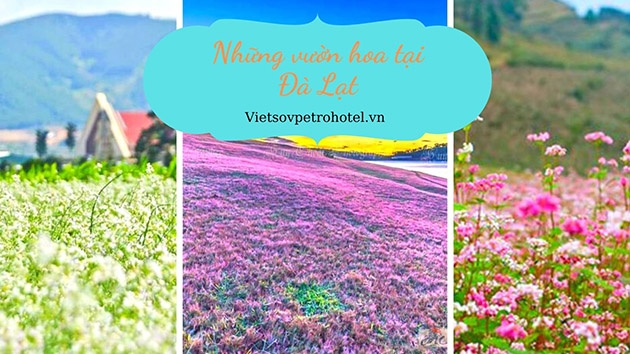 Những vườn hoa tại Đà Lạt